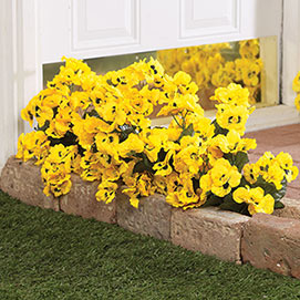 All Weather Forever Blooms- Pansy Yellow