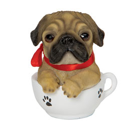 Teacup Puppies - Pug