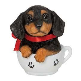 Teacup Puppies - Dachshund