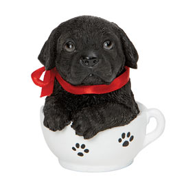 Teacup Puppies - Black Lab