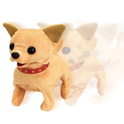 Walking Chihuahua