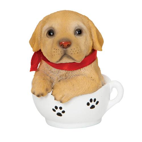 Teacup Puppies - Golden
