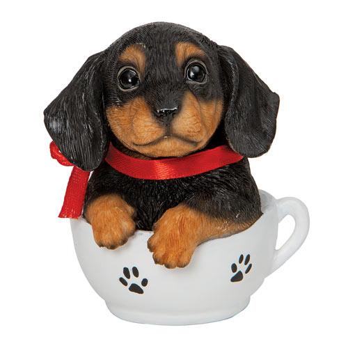 Teacup Puppies - Dachshund