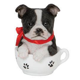 Boston Terrie Teacup Puppy
