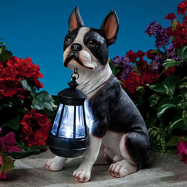 Dog Solar Lantern- Boston Terrier