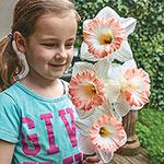 British Gamble Daffodil