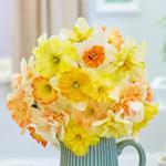Weatherproof Daffodil Mixture