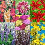 Hummingbird Designer Garden