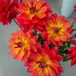 Firepot Dahlia