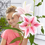 Pink Brilliant Lily Tree®