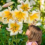 Miss Peculiar Lily Tree®