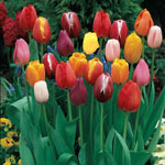 Breck's® Dutch Treat™ Collection