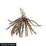Nile Crane Daylily