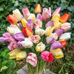 Creamy Lavender Flan Tulip Mixture
