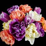 Floral Euphoria Tulip Mixture