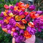 Orange-Blueberry Clafoutis Tulip Mixture