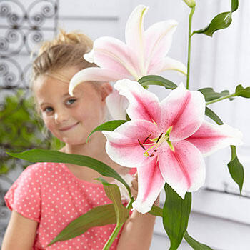 Pink Brilliant Lily Tree<sup>®</sup>