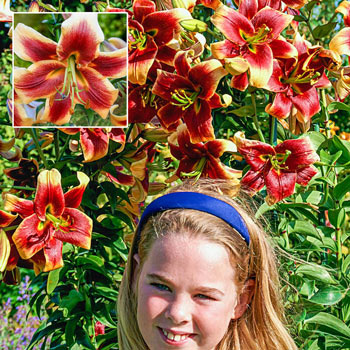 Debby Lily Tree<sup>®</sup>