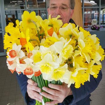 Cutflower Garden Daffodil Mixture