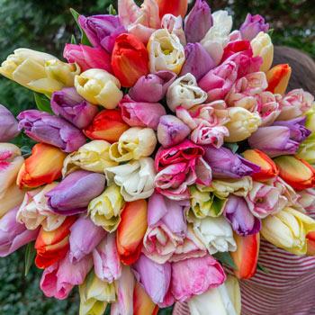 Pastel Confetti Shortbread Tulip Mixture