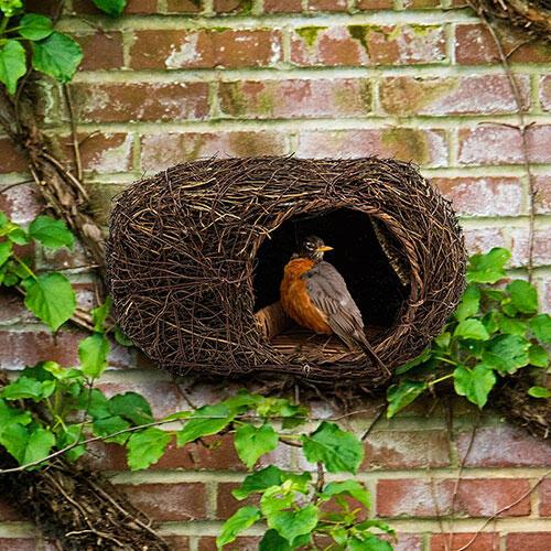 Songbird Nester