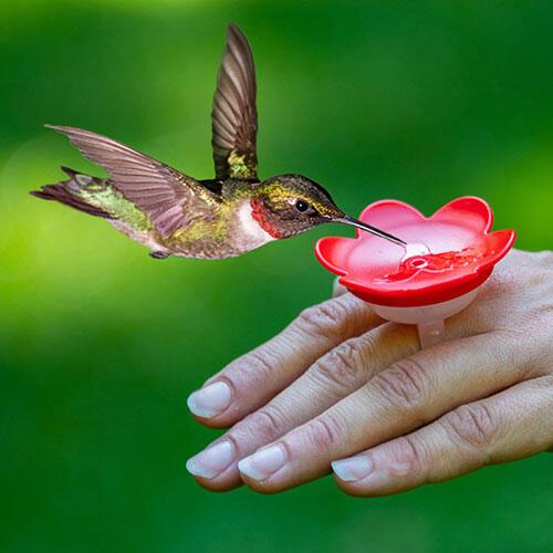 Hummingbird Ring