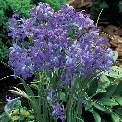 20 Ways To Spiff Up Your Backyard For Spring: Lavender Mountain Lilies