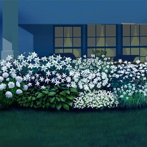 Moonlight Flower Garden