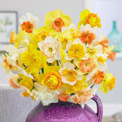 Hybridizers Daffodil Mixture