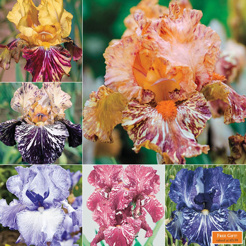 Breck's® Renowned Batik Iris Collection