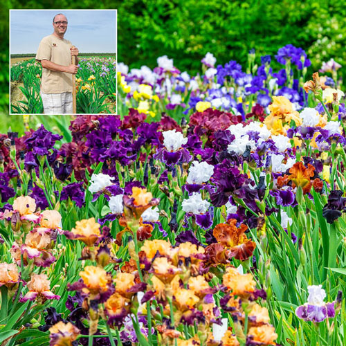 Breeders Choice Bearded Iris Mixture
