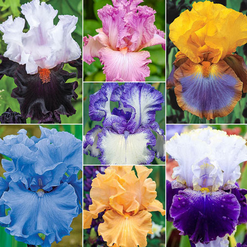 Breck's® Rainbow Iris Collection