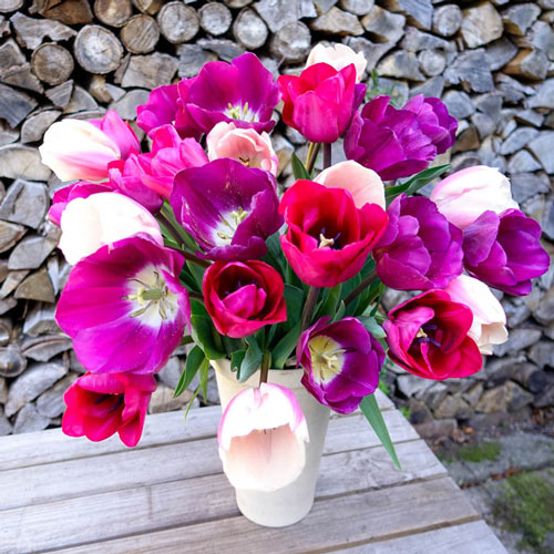 Cherry Divinity Tulip Mixture