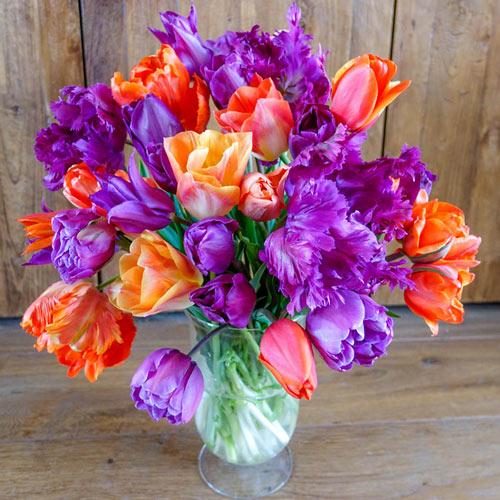 Mango-Blueberry Tart Tulip Mixture