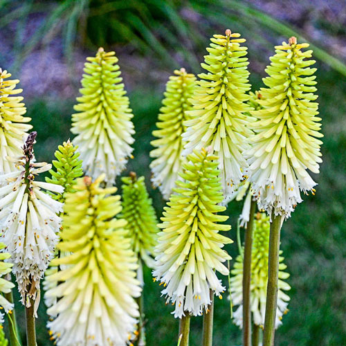 Lady Luck Red Hot Poker