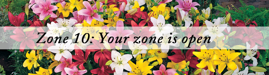 Best Plants for Zone 10