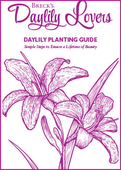 Planting Guide for Daylilies
