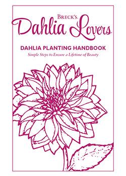 Planting Guide for Dahlias