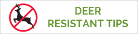 Deer Resistant Growing Tips