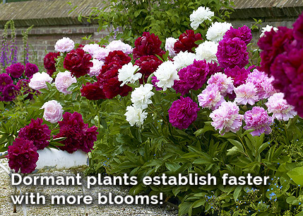 Dormant Bloom