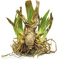 Dormant Plants