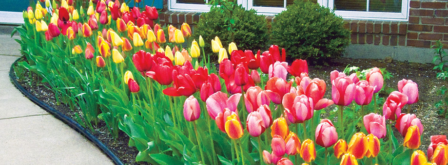 Landscaping with bulbs: naturalizing