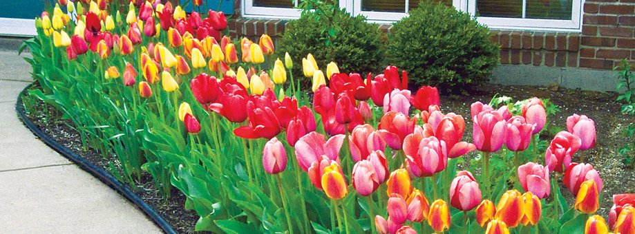 Landscaping with bulbs: size