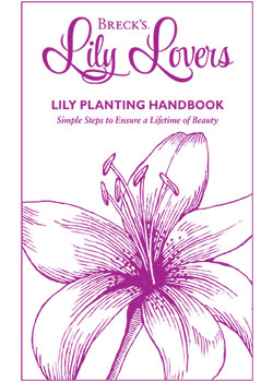 Planting Guide for Lily Lovers