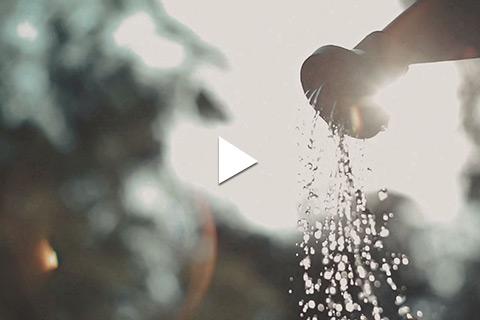 Bareroot Rose - Watering