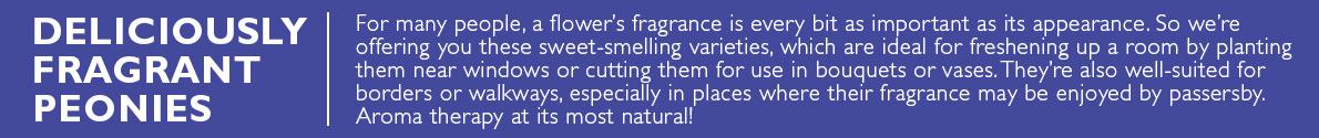 Fragrant Peonies