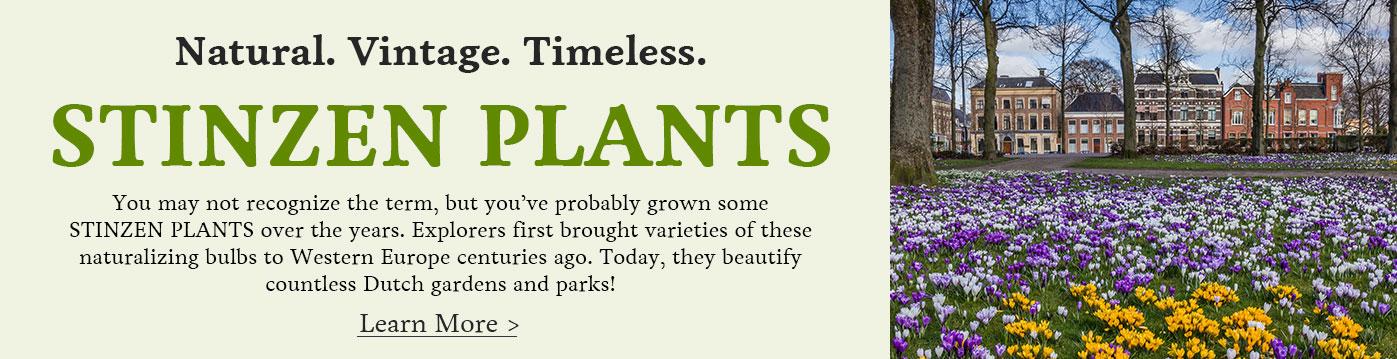 Stinzen Plants