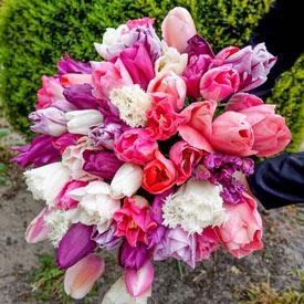 Raspberry Sorbet Tulip Mixture