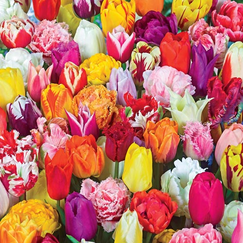 2 Months of Spring Carnival Tulip Mixture