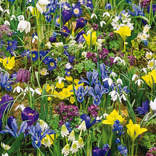 Eternal Spring 3-Month Naturalizing Mixture